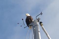 eagle-on-mast
